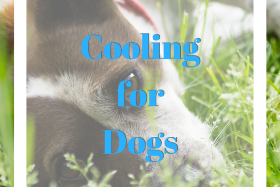 Cooling_For_Dogs